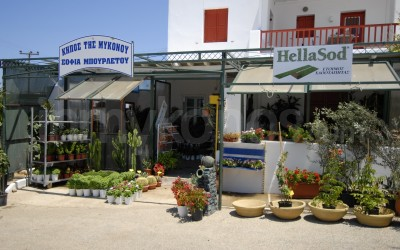 Garden of Mykonos - _MYK2534 - Mykonos, Greece